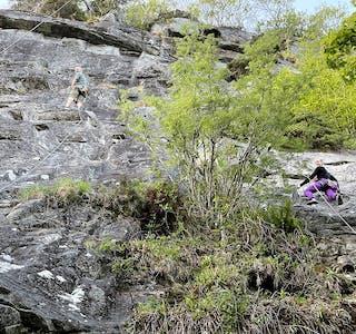 UTSIKT: Erik Botnmark og Annette Gjeterud på veg mot toppen. Når klatrarane kjem opp over tretoppane, kan dei nyte utsikta ut over Syltefjorden, og Som ein av deltakarane denne kvelden sa: – Ein får same utsikta som frå toppen av fjellet, men det er noko heilt anna å stå her i veggen.